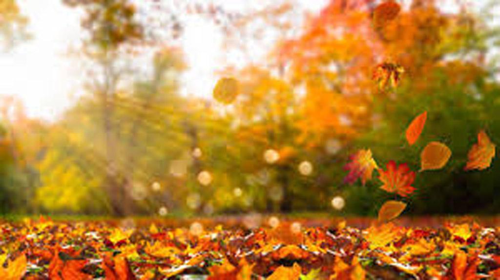 El otoño de la liberación