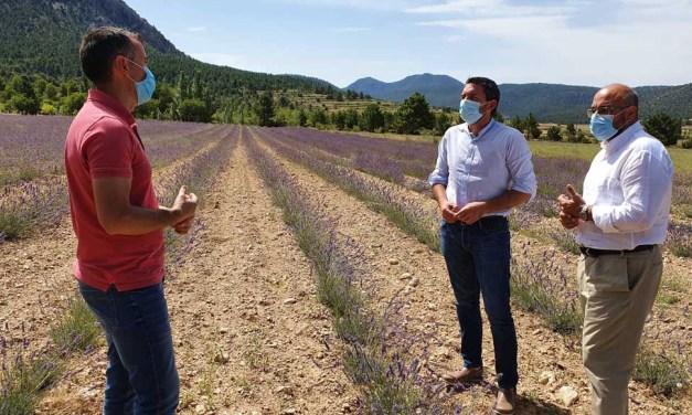 Agricultura apuesta por el cultivo de aromáticas como medida de generación de empleo y fijación de población en zonas rurales