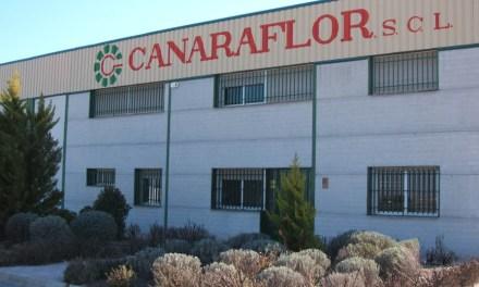 Subvención de 195.000 euros a Canaraflor para la creación del primer centro de innovación en materia de flor cortada