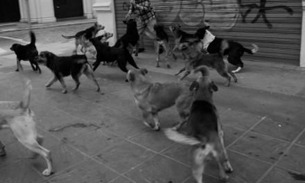 Perros de mi infancia