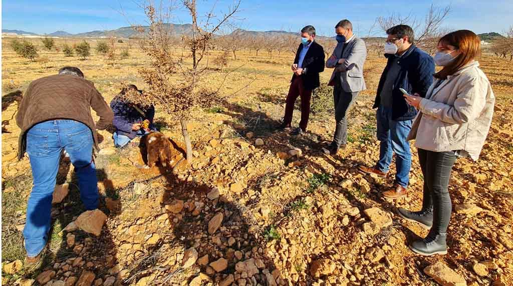 Los buenos resultados de los cultivos experimentales de trufa negra abren una nueva alternativa a la agricultura de Caravaca