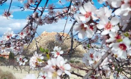 Descubrir la mirada del paisaje de Mula a través de la floración del almendro