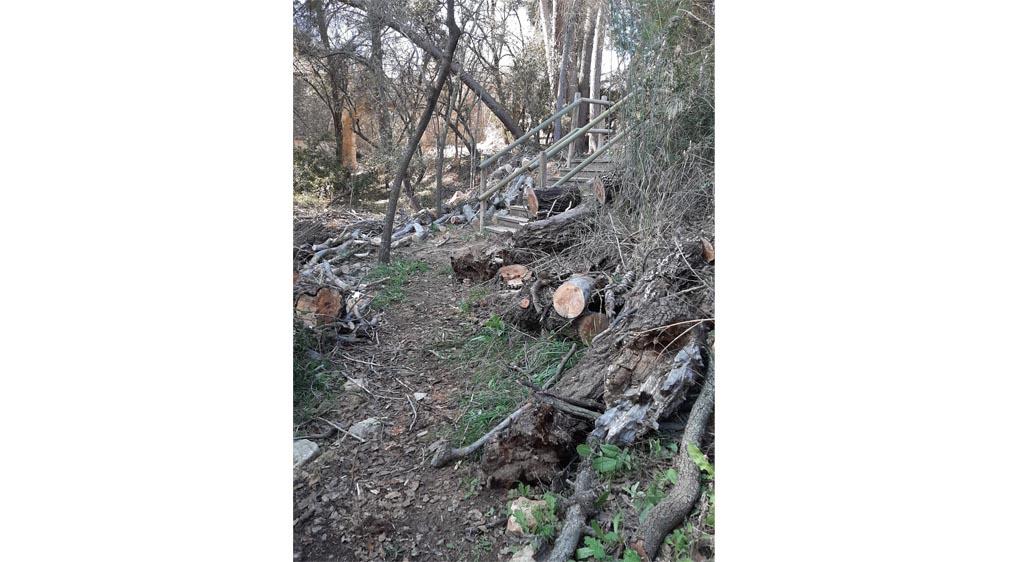 Labores de conservación medioambiental en el Barranco de La Regidora