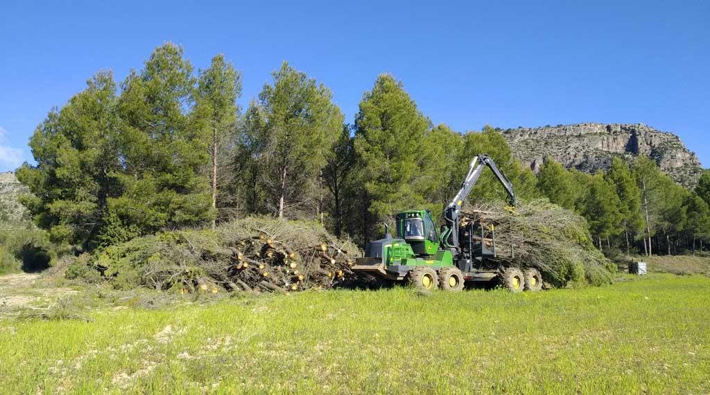 La gestión forestal desarrollada en la Región de Murcia comienza a tener un papel relevante en la lucha contra el cambio climático