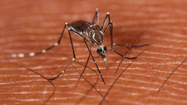 Mosco del dengue | Foto: especial