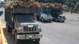 Camiones cañeros de Colima   Foto: especial