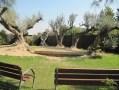 Garden Bordas