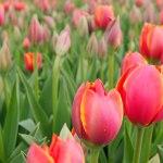 El mes de las Flores Mayo