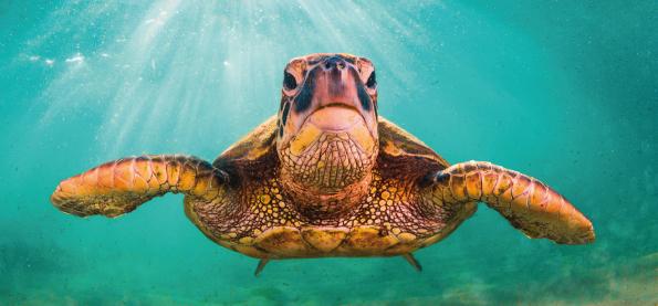 tortugas legendarias