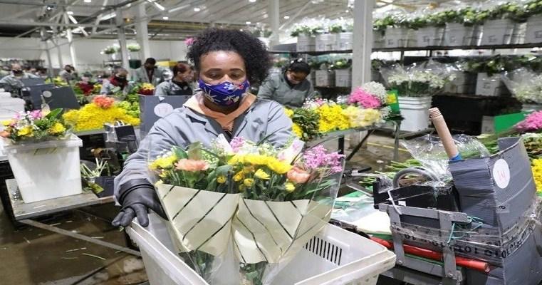 ECONOMÍA: ¡Cundinamarca, número UNO en exportación de flores en Colombia! Este  2021, la pandemia hace que la operación logística sea mucho más exigente. (+VIDEO).