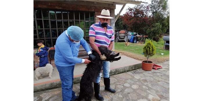 Este viernes habrá vacunación canina y felina en el Sector Santa Cruz de Cajicá