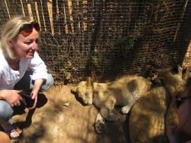 Lionceaux de 3 mois...déjà des belles bêtes!