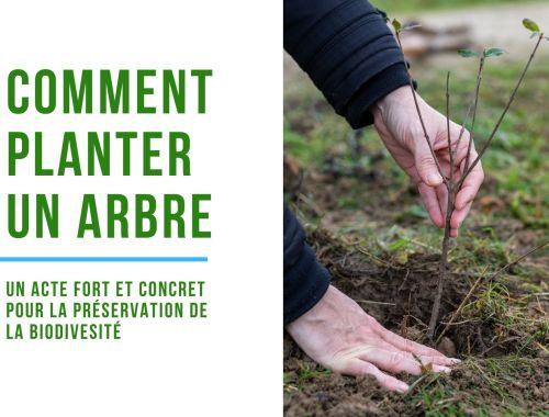 comment planter un arbre pour la biodiversité ? #jardinage #biodiversité #arbre #environnement #climat #onestpret #écologie #agirpourdemain