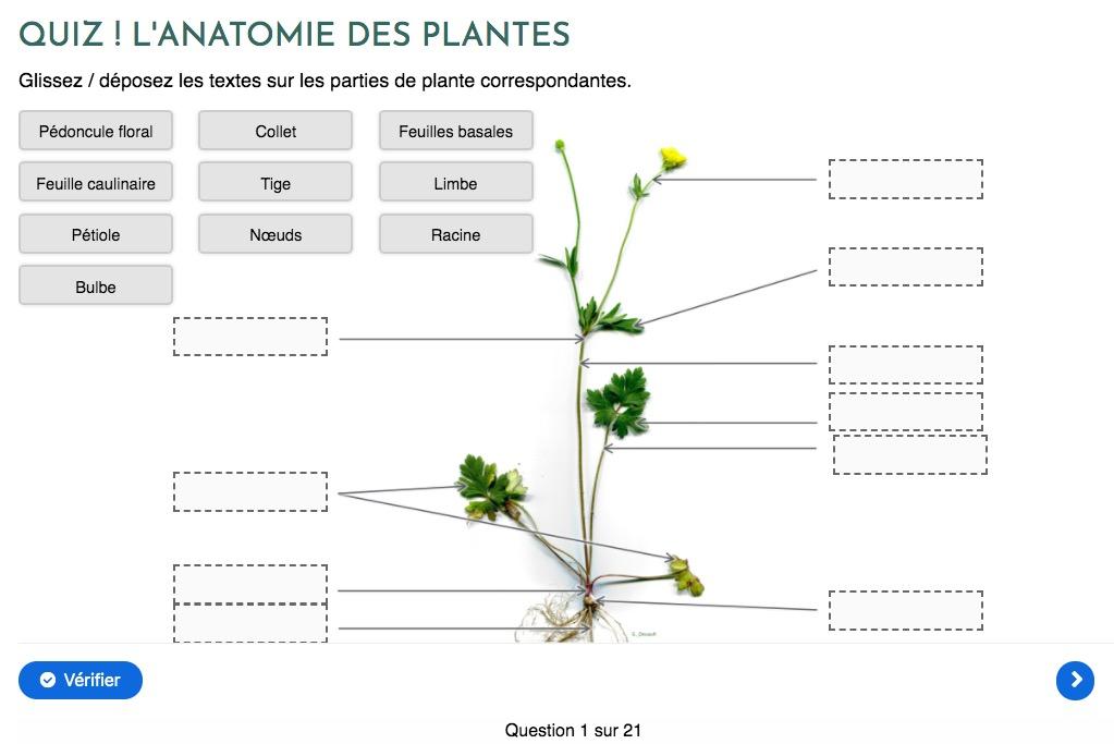 test avis le chemin de la nature formation du cueilleur cueillette de plantes sauvages botanique herboriste herbaliste phytothérapie aromathérapie gemmothérapie #cueillette #botanique #survivalisme