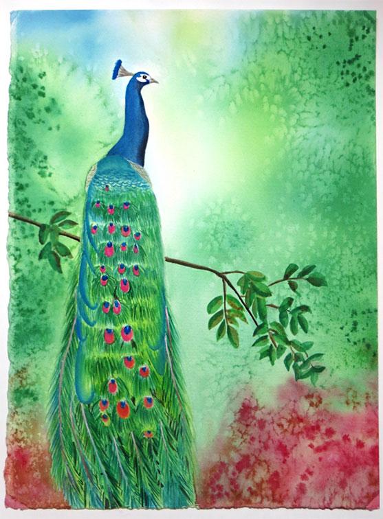 peacockart