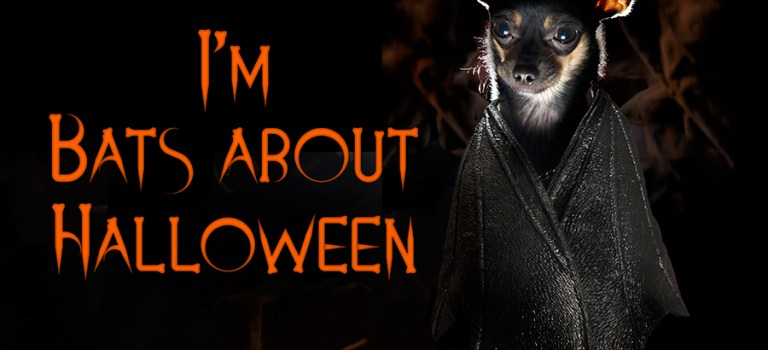 Simply batty this Halloween