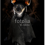 chihuahua bat