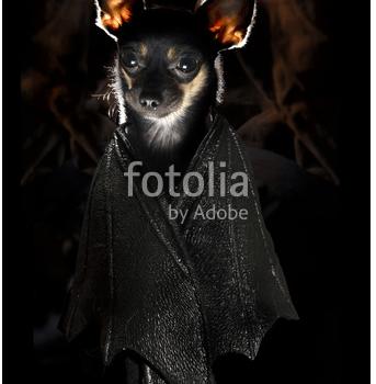 Bats about Adobe?