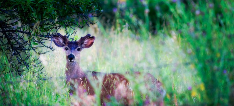 Peaceful deer in the grass