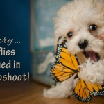 puppy playing with fake butterfly