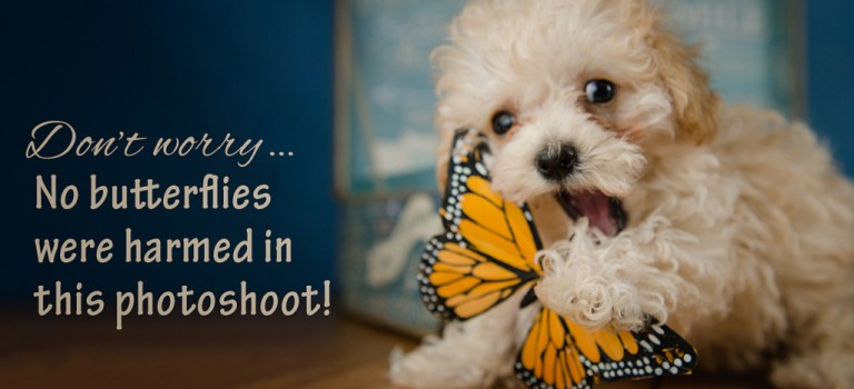 Photographing playful puppies!