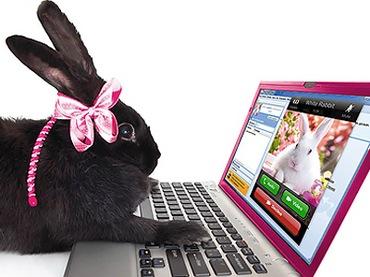 Conejo en ordenador
