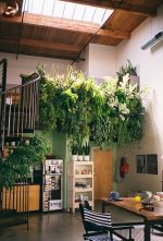 Best Indoor Plants for Tropical Home Decoration Part 18