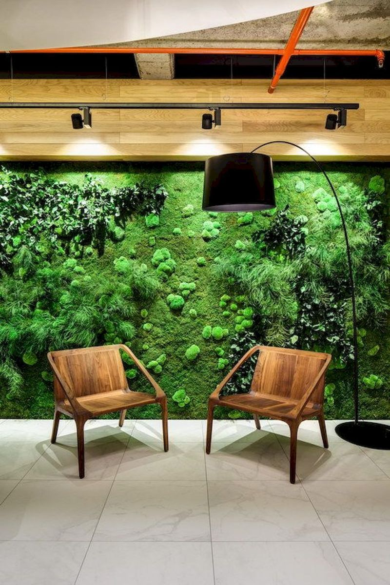 Best Indoor Plants for Tropical Home Decoration Part 20