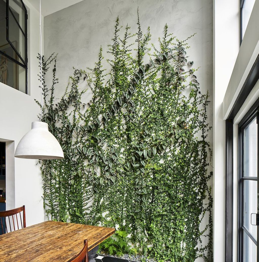Best Indoor Plants for Tropical Home Decoration Part 29