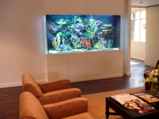 Exotic Wall Mounted Aquarium Giving Better Mood Everyday Part 33
