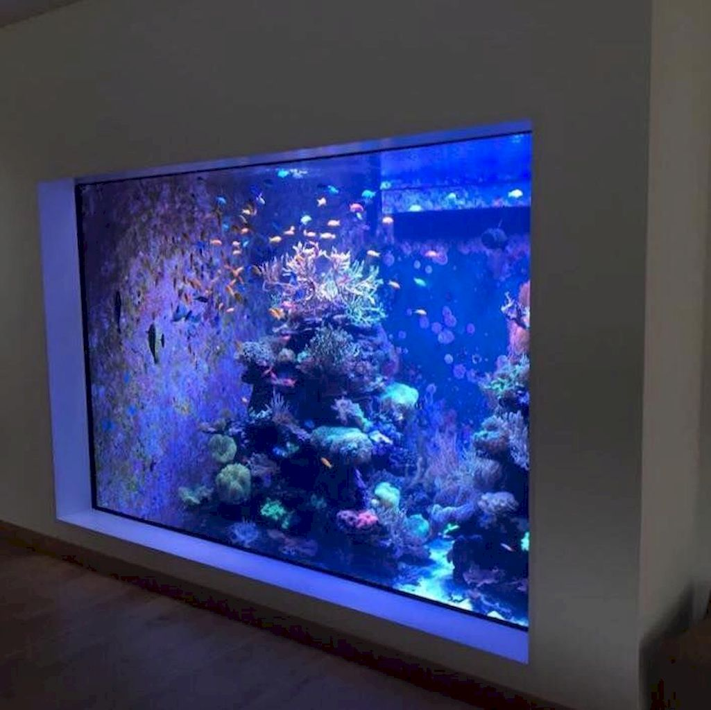 Exotic Wall Mounted Aquarium Giving Better Mood Everyday Part 37