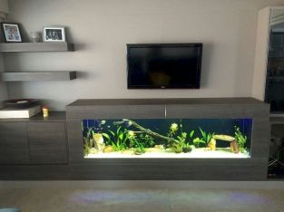 Exotic Wall Mounted Aquarium Giving Better Mood Everyday Part 41