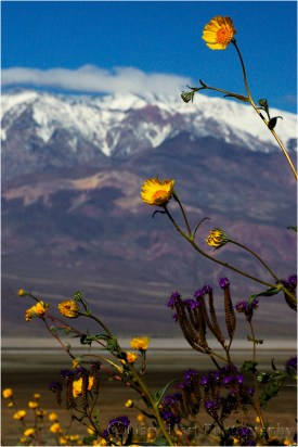 Gary Hart Photography: Desert Gold and Telescope Peak, Death Valley