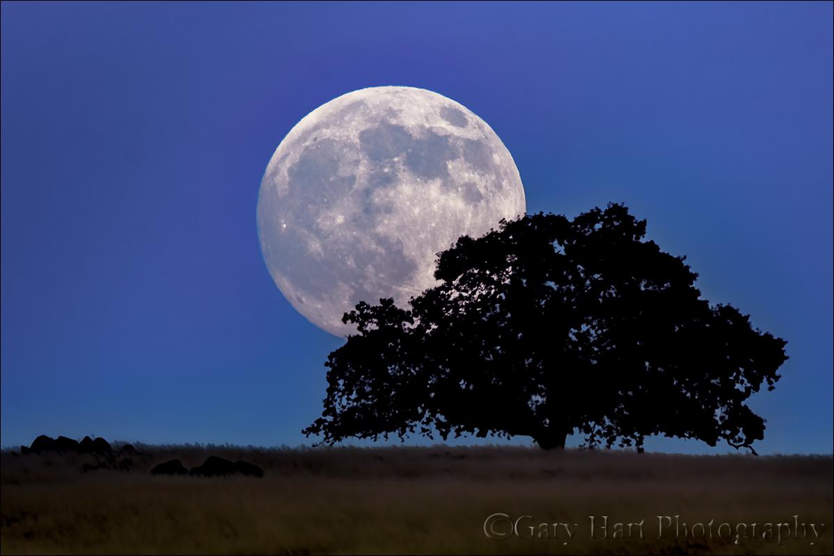 full moon photography tips - photo #28