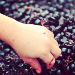Eloquesta Handmade Red Wines