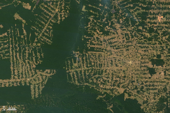 La deforestación en la Selva Amazónica