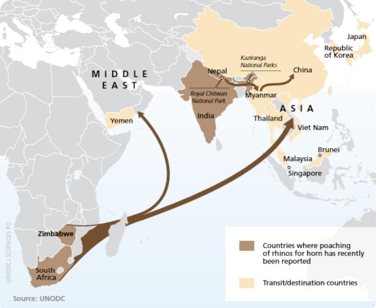 Principales flujos de tráfico de cuerno de rinoceronte