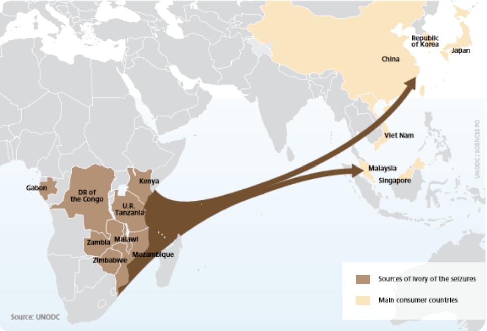 Principales flujos de tráfico de marfil