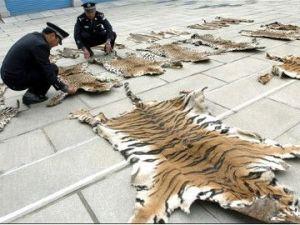 El tráfico de fauna silvestre, un crimen transnacional