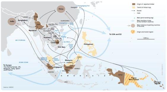 Rutas de tráfico ilegal de madera desde Asia al mundo