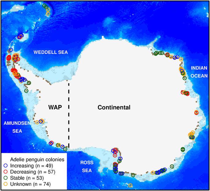 antartida pingüinos