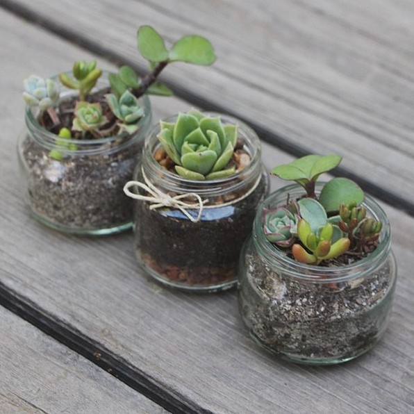 13 Beautiful Plants In Jars Garden You're Going To Fall In Love 20