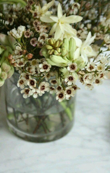 13 Beautiful Plants In Jars Garden You're Going To Fall In Love 23