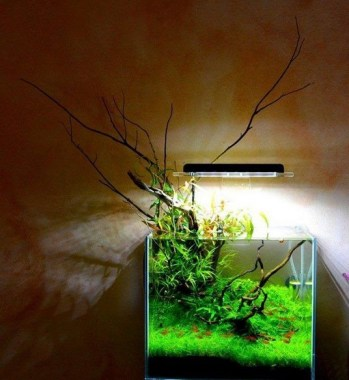 19 Brilliant And Creative DIY Nano Pond Garden Combination 09
