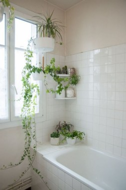 18 Highest Hanging Plants Ideas For Bathroom 05