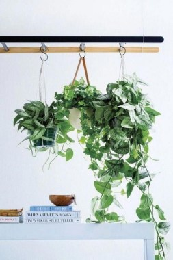 18 Highest Hanging Plants Ideas For Bathroom 18