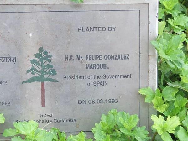 Árbol donado por Felipe González