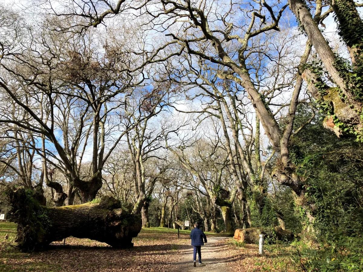 Gijon con niños, Oriol en el Jardin Botanico Atlantico