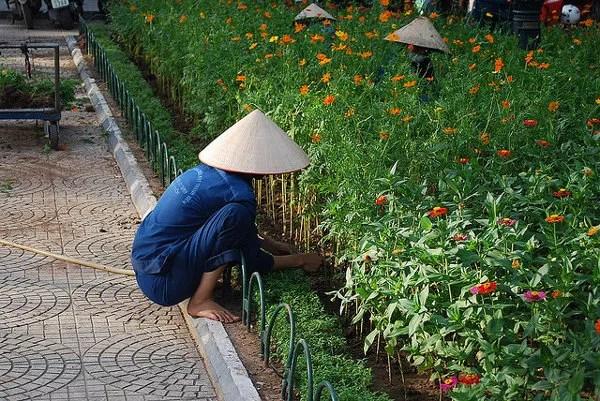 Arreglando-las-flores-de-Hanoi ▷ Cosas que ver en Hanoi, imprescindibles para visitar la capital vietnamita.