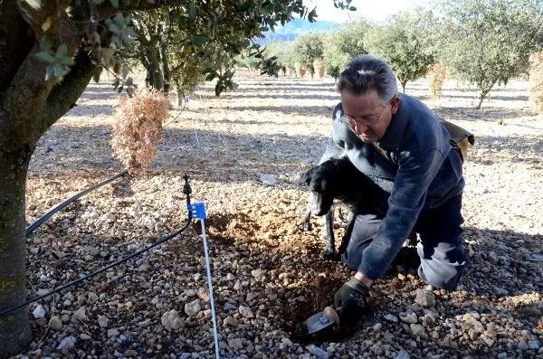 Demetrio el mejor buscador de trufa negra de Castellón